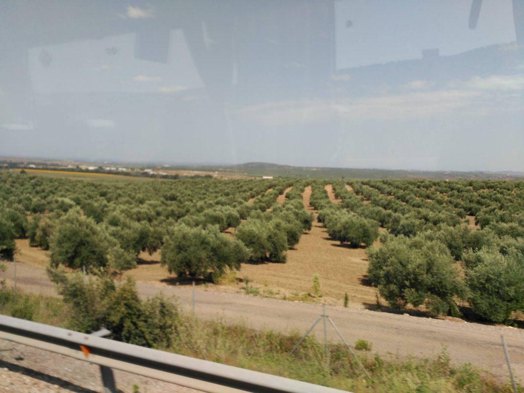 sector agrari