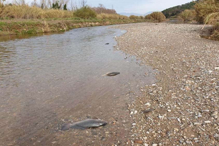riu besòs