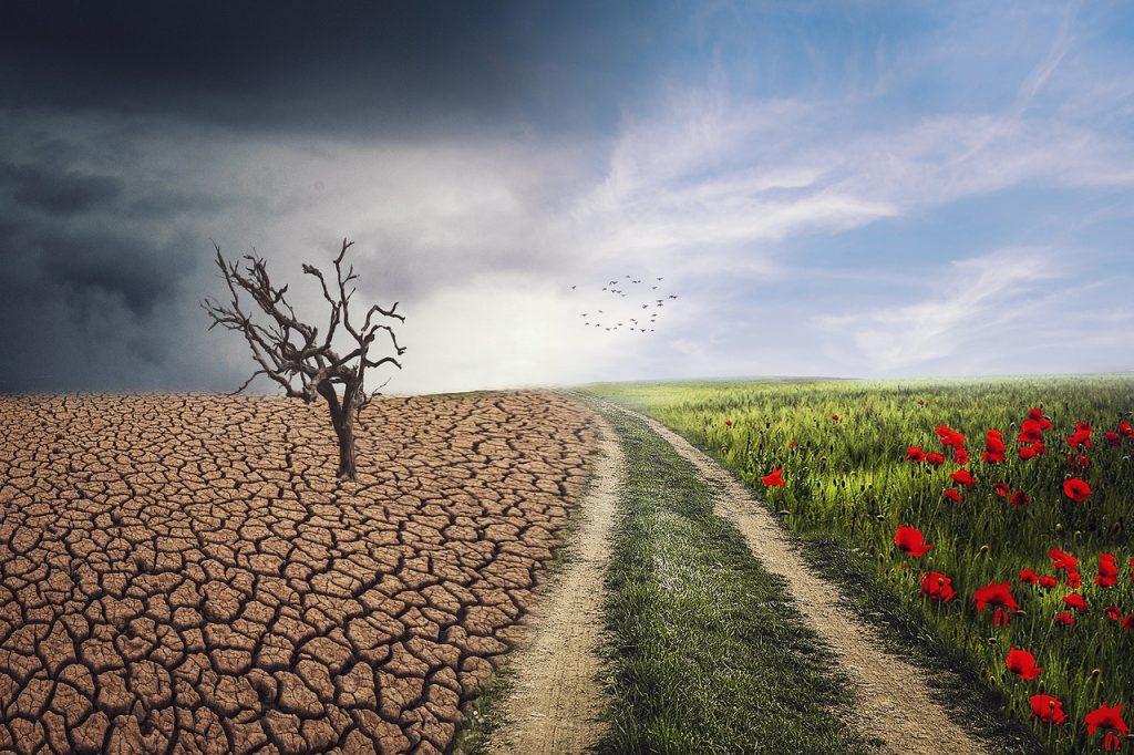 emergència climàtica
